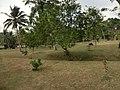 Koggala, Sri Lanka - panoramio (1).jpg