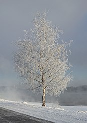 Kolomenskoe in white - Dec12 - 03 snow.jpg