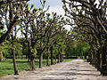 Kongens Have - tree-lined avenue.jpg