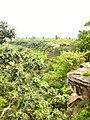 Kordara, Madhya Pradesh 485446, India - panoramio (1).jpg