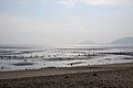 Korea-A foreshore near Incheon International Airport-01.jpg