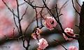 Korea Palace Spring Flowers 14.jpg