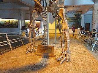 Birla Science Museum - Image: Kotasauraus adilabad