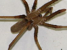 A spiders web sex scene