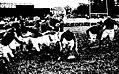 LOU - Narbonne, championnat de France 1933, le demi de mêlée Honoré Laffont ramasse la balle.jpg