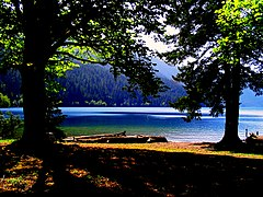 Lake Crescent trees.jpg