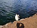 Lake Eola (29740299884).jpg