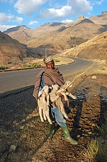 Lesotho – Travel guide at Wikivoyage