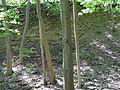 Landschaftsschutzgebiet Gestorfer Lößhügel - Steinbruch (4).JPG
