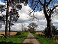 Lane Leading to Victoria Lodge on the A4 - geograph.org.uk - 3396.jpg