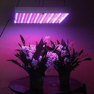 Grow light - Two plants growing under an LED grow light