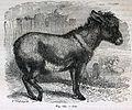 """Les merveilles de l'industrie, 1873 """"Ane"""". (4726390605).jpg"""