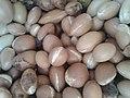 Les noyaux des fruits d arganier.jpg