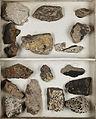 Lichenes Helvetici IX X 1833 033.jpg