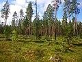 Lieksa, Ruunaa Hiking Centre - panoramio (4).jpg