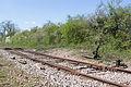 Ligne de Bourron-Marlotte à Malesherbes - 2013-04-21 - IMG 9348.jpg