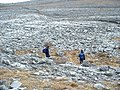 Limestone Formations, Burren - geograph.org.uk - 112831.jpg