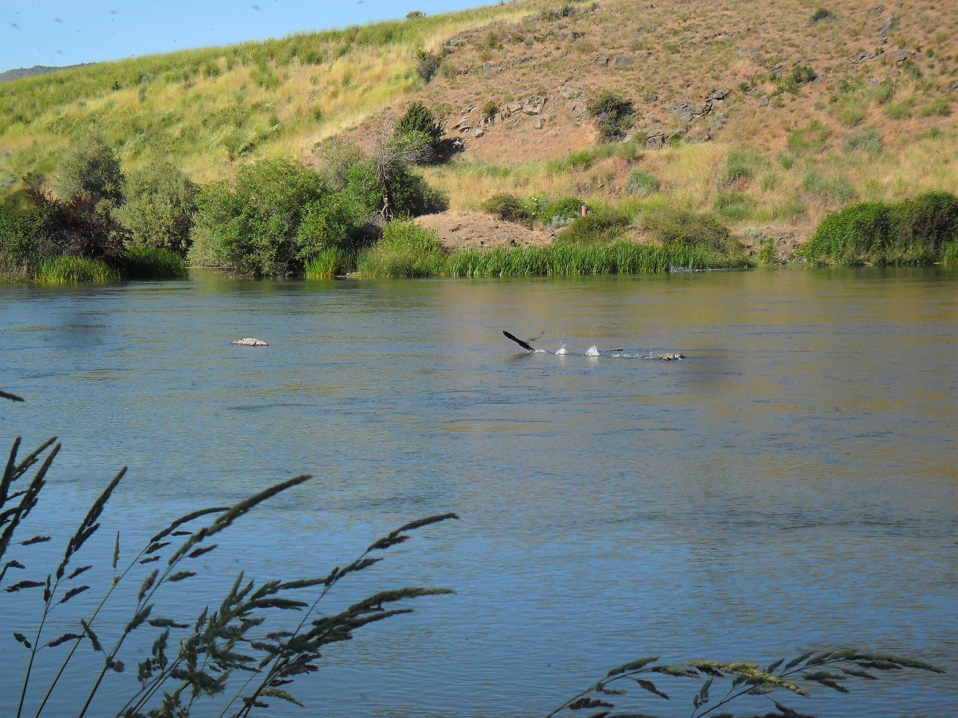 klamath river single men Join oars for a klamath river rafting adventure in northern california and enjoy 3 days of family rafting on the lower klamath with kids as young as 4.