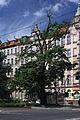 Lipa Sienkiewicza Wrocław.jpg