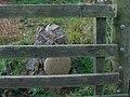 Little memorial tucked in fence corner - geograph.org.uk - 1012006.jpg