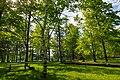 Loon Lake Picnic Area - Savanna Portage State Park, Minnesota (34360783813).jpg