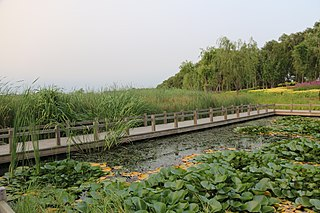 Lotus Lake Wetland Park