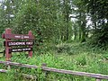 Loughermore Forest - geograph.org.uk - 528881.jpg