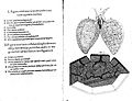 Lungs Wellcome L0000102EA.jpg