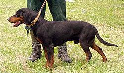 Black Dog Corp