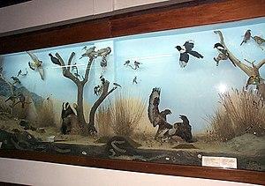 Natural History Museum (Thessaloniki) - Image: Macedonian Museums 65 Fysikhs Istorias Thessalonikhs 285