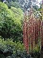 Madeira Monte Palm Wettbwerb.jpg