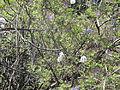 Madeira em Abril de 2011 IMG 1792 (5663654383).jpg
