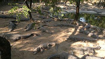 Madras crocodile bank trust in Chennai.jpg