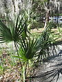 Magnolia Plantation and Gardens - Charleston, South Carolina (8556559586).jpg