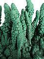 Malachite-t08-18d.jpg