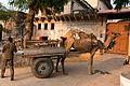 Mandawa-Camel carriage-20131007.jpg