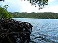 Mangroves and water at Hurricane Hole - panoramio.jpg