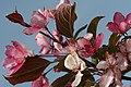 Mani ziedi My flowers - panoramio (25).jpg