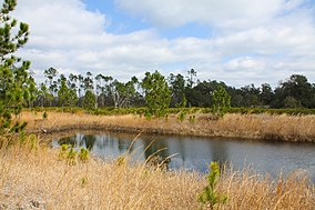 Marshland in Scrub-Jay Loop Trail (4367913144).jpg