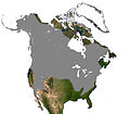 Masked Shrew North America Range.jpg