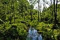 Mason Neck National Wildlife Refuge, VA. Credit- USFWS (11820255164).jpg