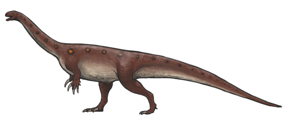 Massospondylus reconstruction