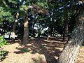 Matsushima Island in Ohori Park 2.JPG