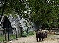Maubeuge .- Zoo Août2017 (12).jpg