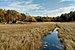 McDougall marsh.jpg