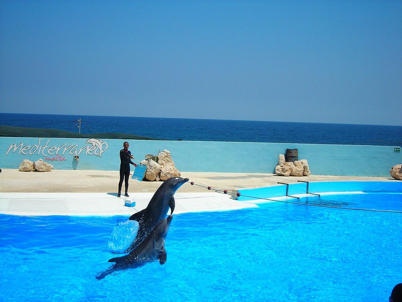 Malta  - Page 2 1280px-Mediterraneo_dolphin_show_1