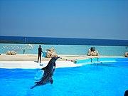 Mediterraneo dolphin show 1