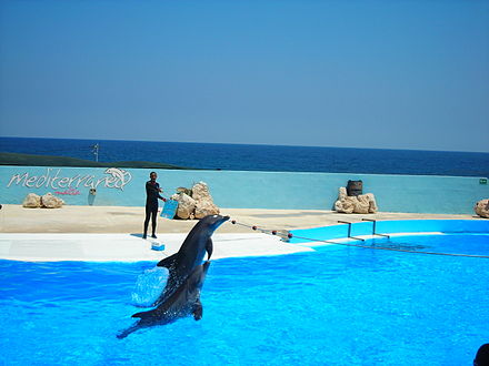 The dolphin show at Mediterraneo Marine Park. Tourism generates a significant part of the GDP of Malta. Mediterraneo dolphin show 1.JPG