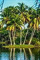 Miami - Fairchild Tropical Botanic Garden - (12259923713).jpg