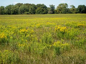 Photo of tallgrass prairie and woodlands at Midewin National Tallgrass Prairie